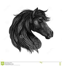 Black Mustang Horse Black Horse Head Profile Portrait Stock Vector Image 77237165