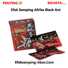 efek sing obat kuat afrika black ant semut hitam efek