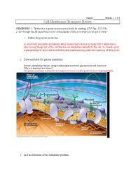 cell transport review answers 1 cell membrane osmosis