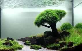 Aquascape Tree Home Accessories An Aquascape Designs Of Highlight And Shadow