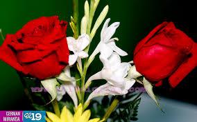 imagenes para enamorar con flores chocolates flores y manualidades para enamorar este 14 de febrero