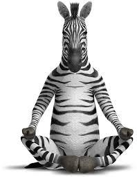 zensations double ended fine brush fine u0026 medium zebra
