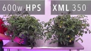 xml 350 led grow light vs 600w hps grow light youtube
