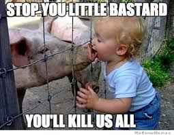 Funny Pig Memes - funny pig memes