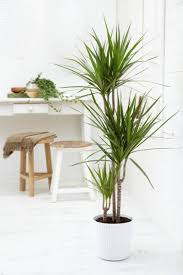 decor console table and stools with beautiful indoor plants for