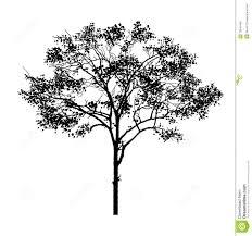 black tree stock photo image of shadow leaf draw 19649460