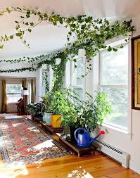 indoor vine plant bring climbing vines indoor and make your home look like a green