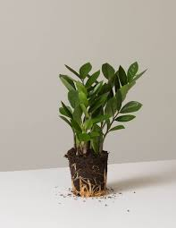best low light house plants low light indoor plants low light house plants peace lily plants