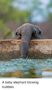 Elephant Meme - a baby elephant blowing bubbles baby it s cold outside meme on me me