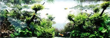 Aquascape Takashi Amano Just Wow Uk Aquatic Plant Society