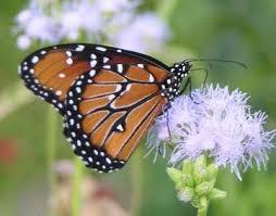 wingsinflight gardening for butterflies providing nectar and