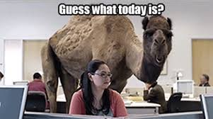 Hump Day Memes - hump day meme weknowmemes