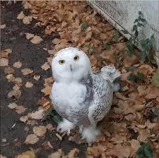 The Barn Owl Carol Stream Tom Skilling Home Facebook