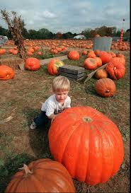 extreme sports giant pumpkin regatta halloween pictures