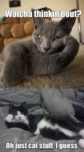 Thinking Cat Meme - like naps and noms i can has cheezburger funny cats cat meme