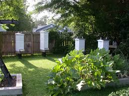 terra preta garden amazonian dark earth garden honeybees by the sea