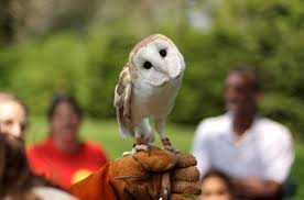 Barn Owl Ohio History Central