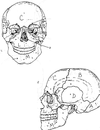 skull bones coloring pages in omeletta me