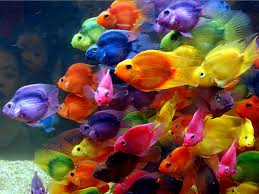 Colors The Butterfly Nebula Beautiful Colors Wallpaper Cichlids