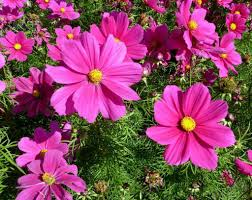 hd images of flowers 274 best flowers images on pinterest hd flower wallpaper fall