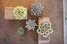 Succulent Plant Gracie Oaks 5 Piece Ceramic Succulent Plant In Pot Wayfair