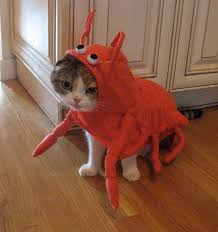 Lobster Costume Omgkitty Things Are About To Get Awesome A Cat In A Lobster