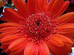 Autumn Flower Autumn Flower By Kiriaki On Deviantart