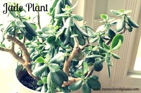 plants that don t need much water houseplants that don t need much