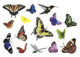butterfly murals collection wallsofthewild com