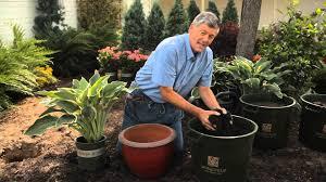 in door plant put in pot vide how to plant container hostas garden savvy youtube