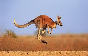 imagenes animales australia australia facts for kids let s head down under national
