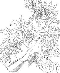 hawaiian flower coloring pages getcoloringpages com