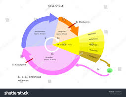 biology cell diagram complete wiring diagram
