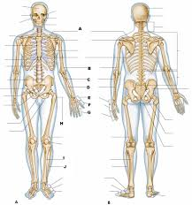 anatomy and physiology quiz chapter 1 at best anatomy learn