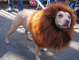 Funny Animal Halloween Costumes 26 Dog Halloween Costumes Images Costumes