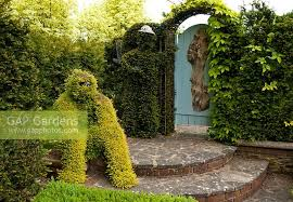 Yew Topiary - gap gardens topiary man grown from lonicera and topiary man in