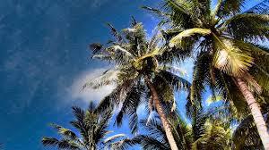 cambodian palm trees nature photos creative market