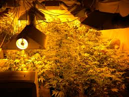 odor management for your grow room thejointblog the right strategy