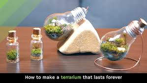 how to make a terrarium that lasts forever video holy kaw