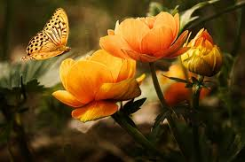 background with flower and butterfly free stock photos in jpeg