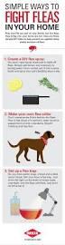3 simple ways to fight fleas diy garden decor pinterest dog