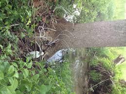 shawns tree corner trees 101