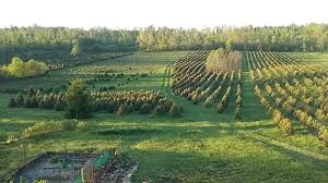 christmas tree farm for sale in the missouri ozarks united