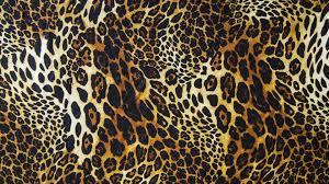 hd wallpaper of animal print