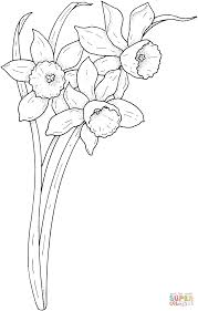 spring narcissus coloring page free printable coloring pages