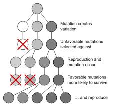 population evolution boundless biology
