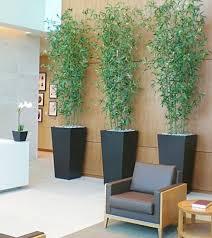 best plant for office best indoor office plants home design