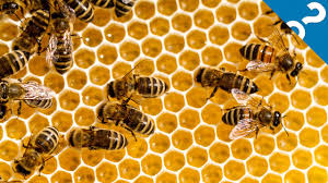 5 of the weirdest things about bees what the stuff youtube