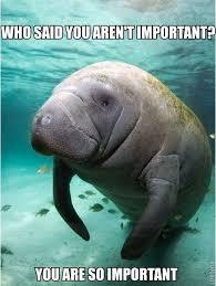 Manatee Meme - 13 best manatee memes images on pinterest manatees calming and