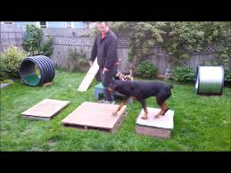 backyard obstacle course with three dogs youtube
